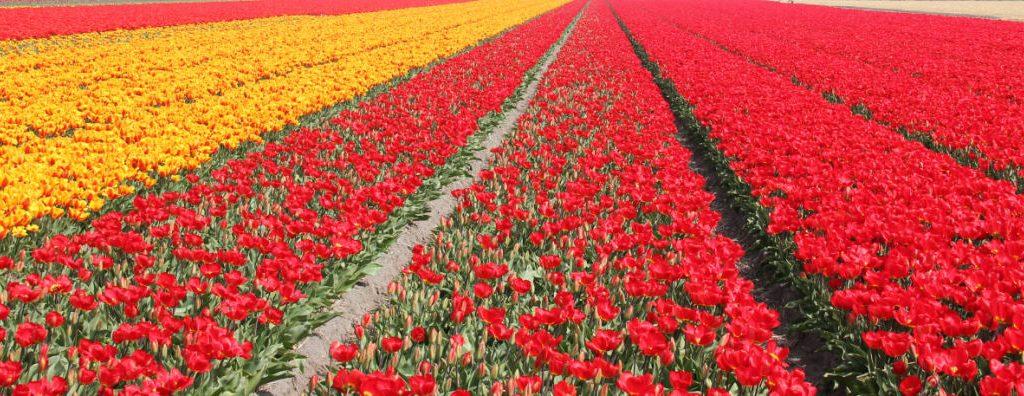 Bakker.com: driver utvecklingen för e-handelsförsäljning av trädgårdsprodukter