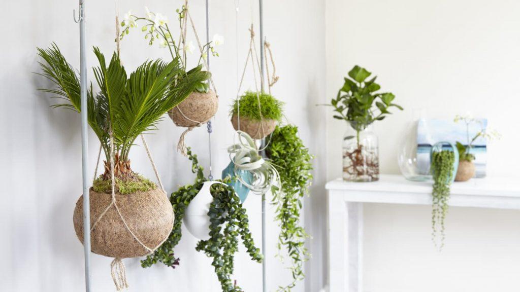 Kokodama - handgjord, 100% naturlig kruka