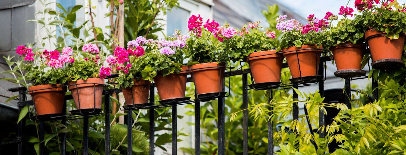 Gör sommarens balkong till en blomstrande berså!